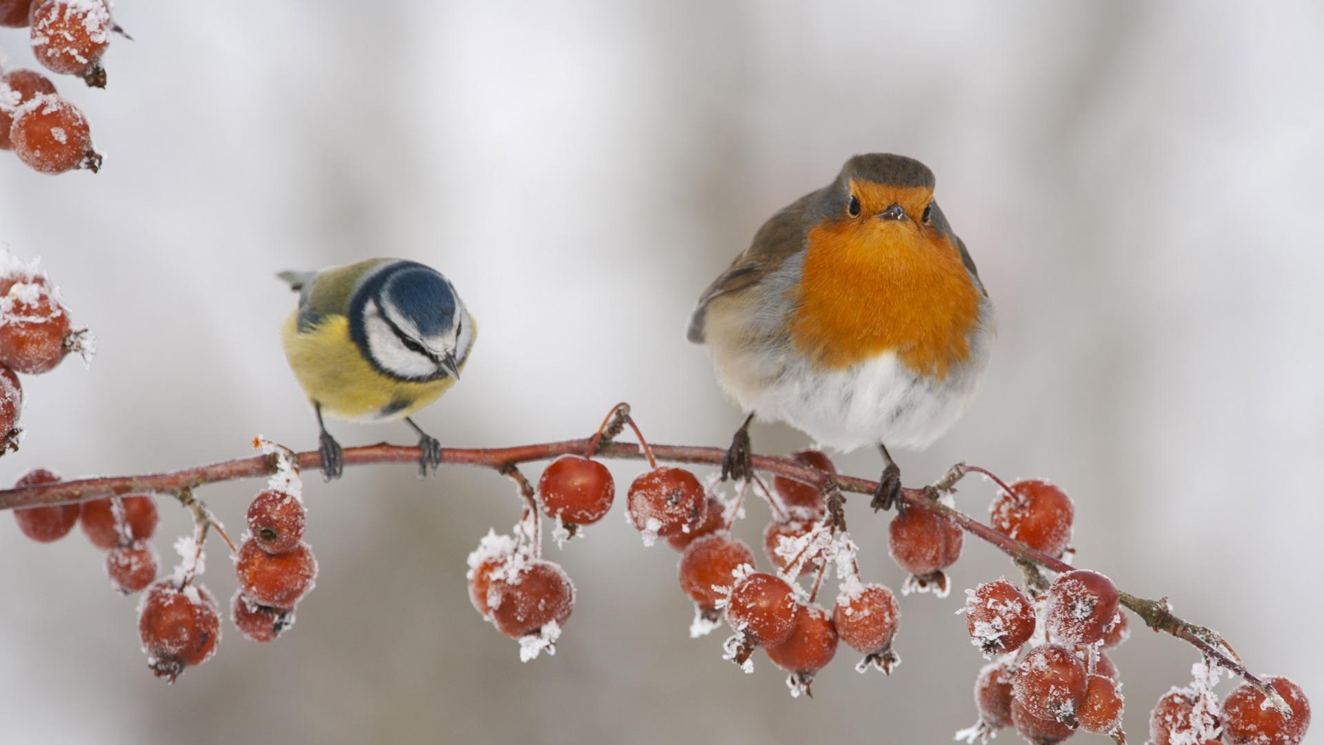 Ảnh nền từ Bing chủ đề mùa đông