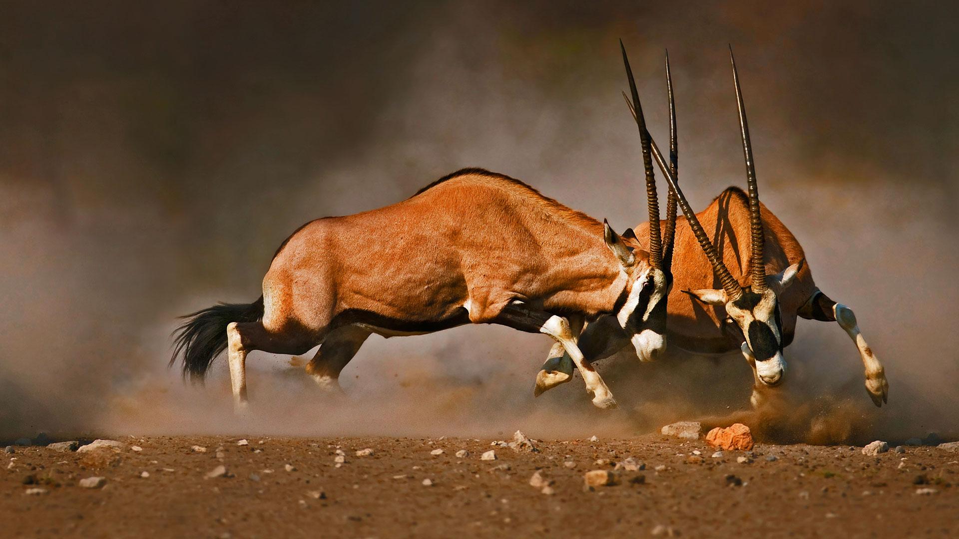 Hình nền Bing động vật hoang dã