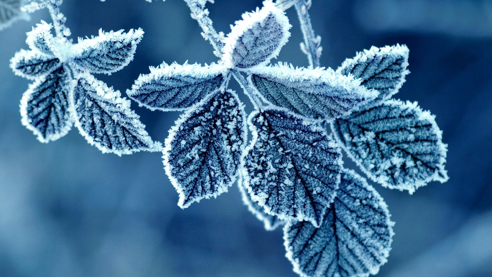 Ảnh nền lá cây đóng băng