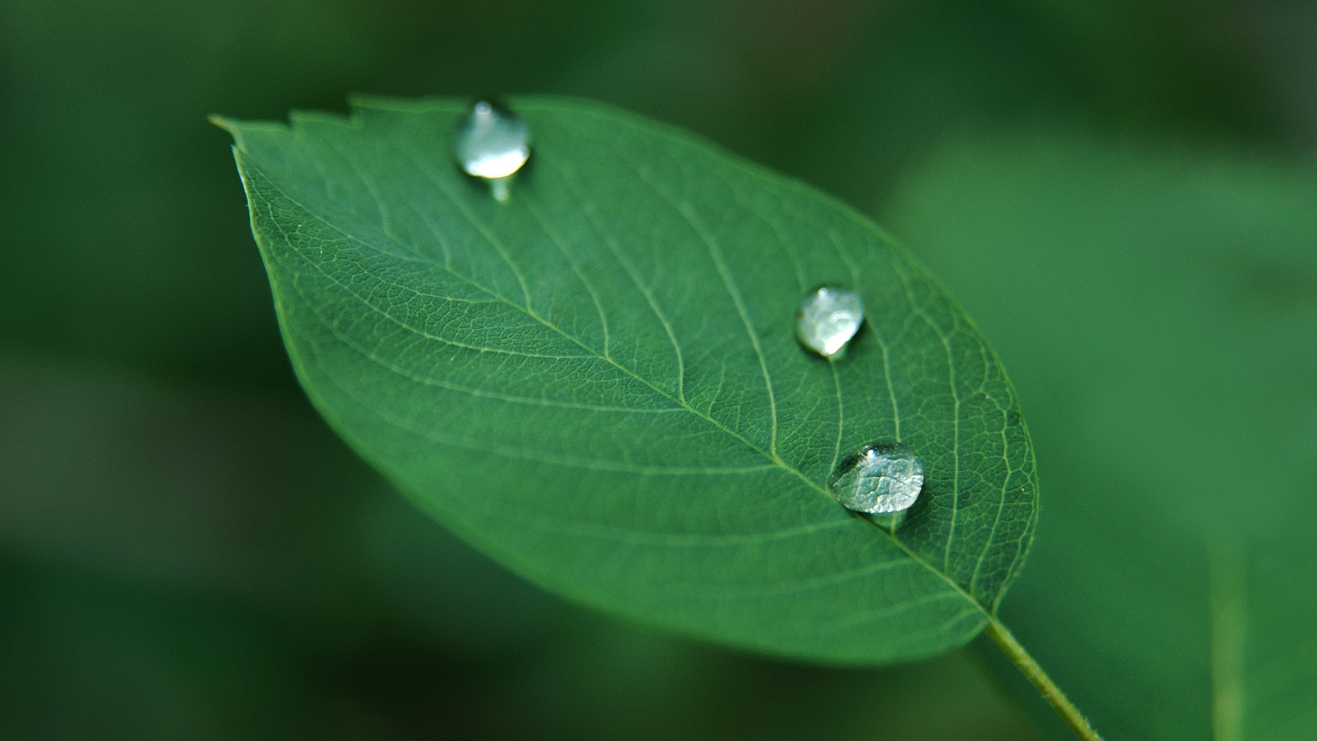 Ảnh nền lá cây và giọt nước