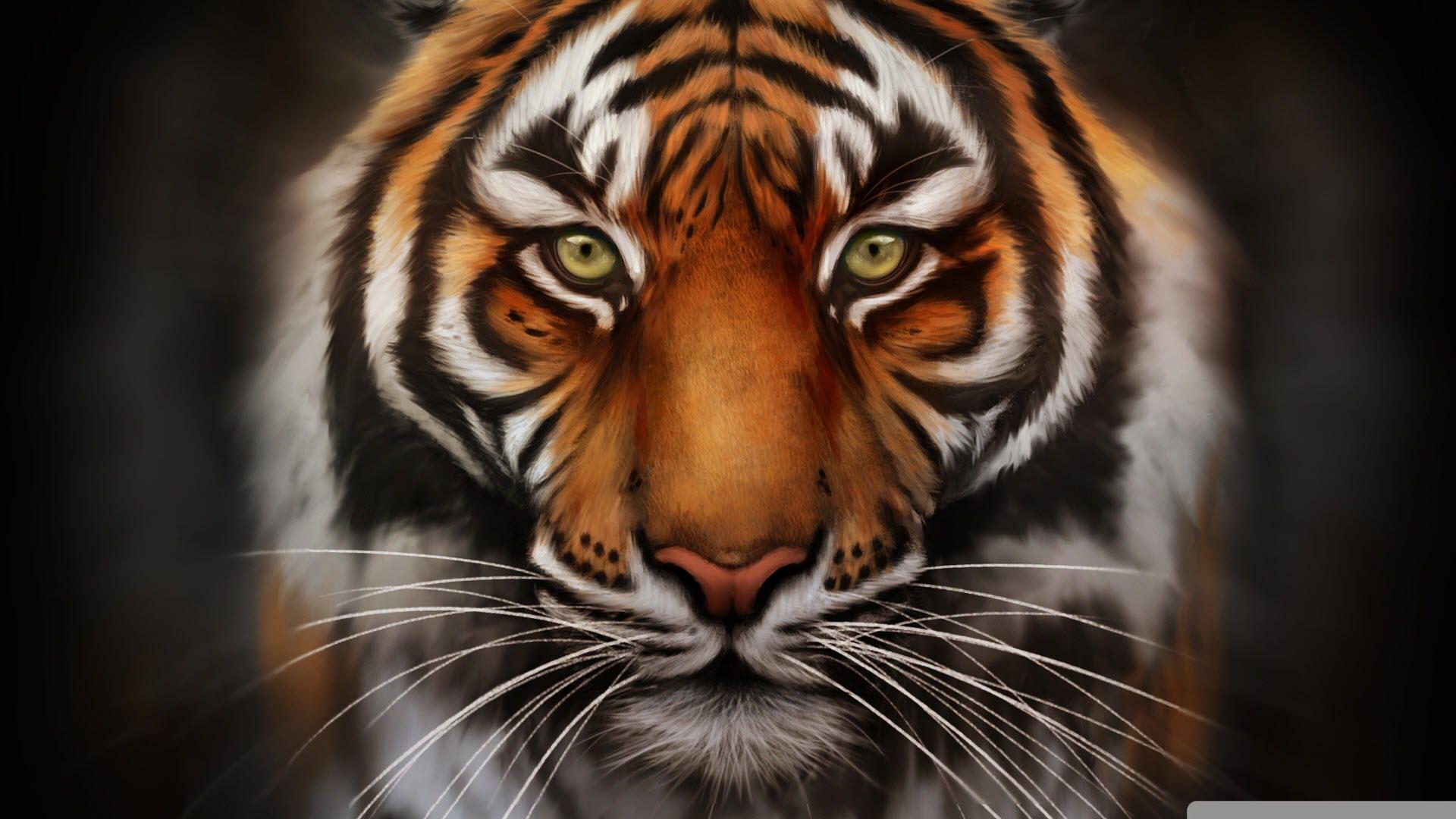 Hình ảnh con hổ cực đẹp