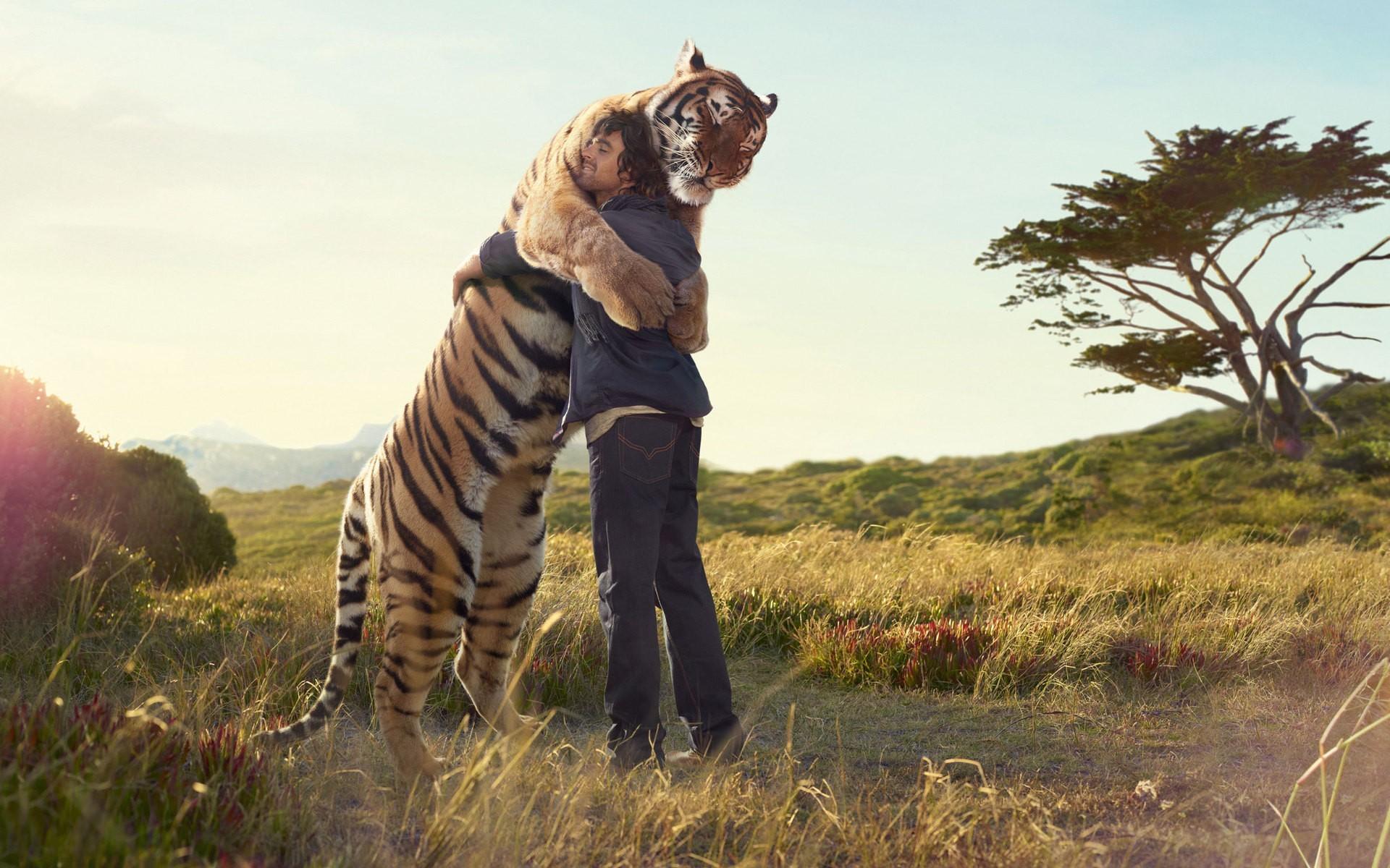 Hình ảnh con hổ đẹp nhất