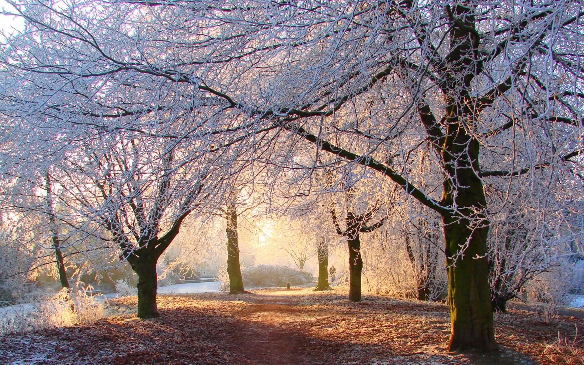 Hình ảnh nền mùa đông đẹp nhất