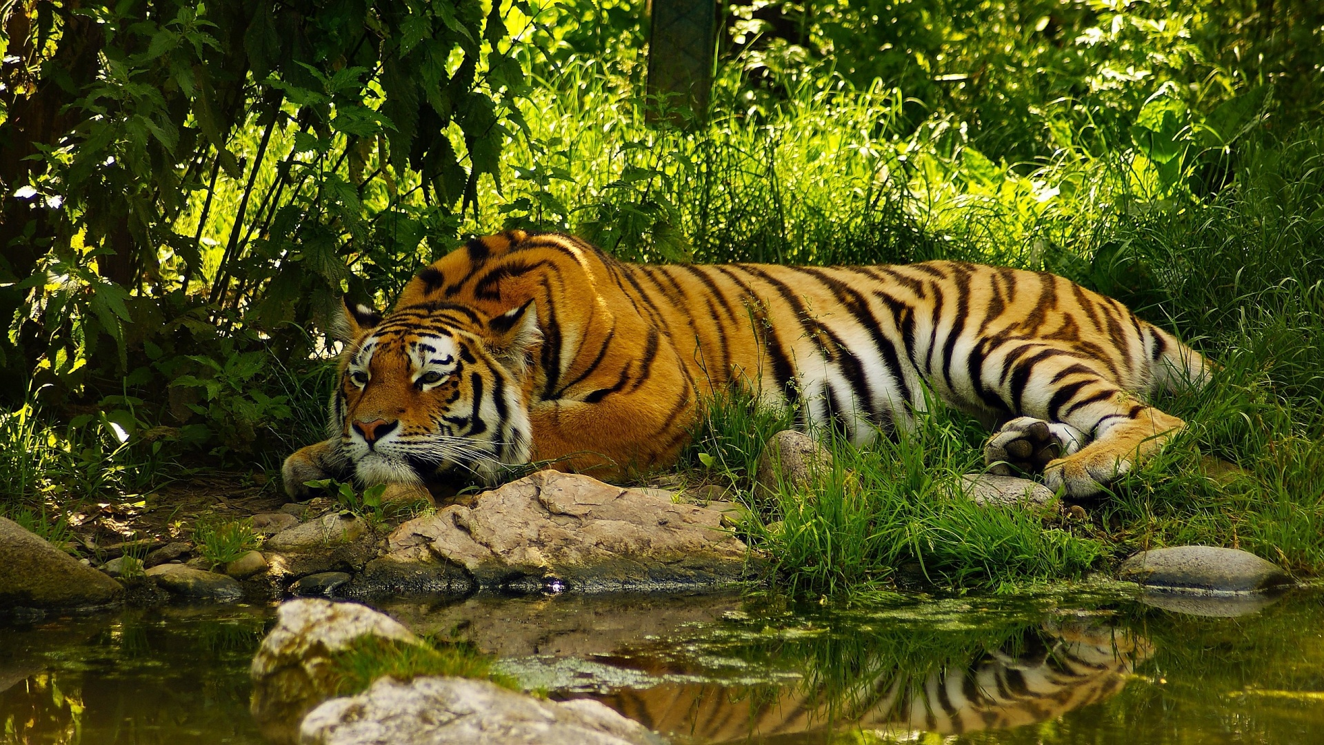 Hình con hổ