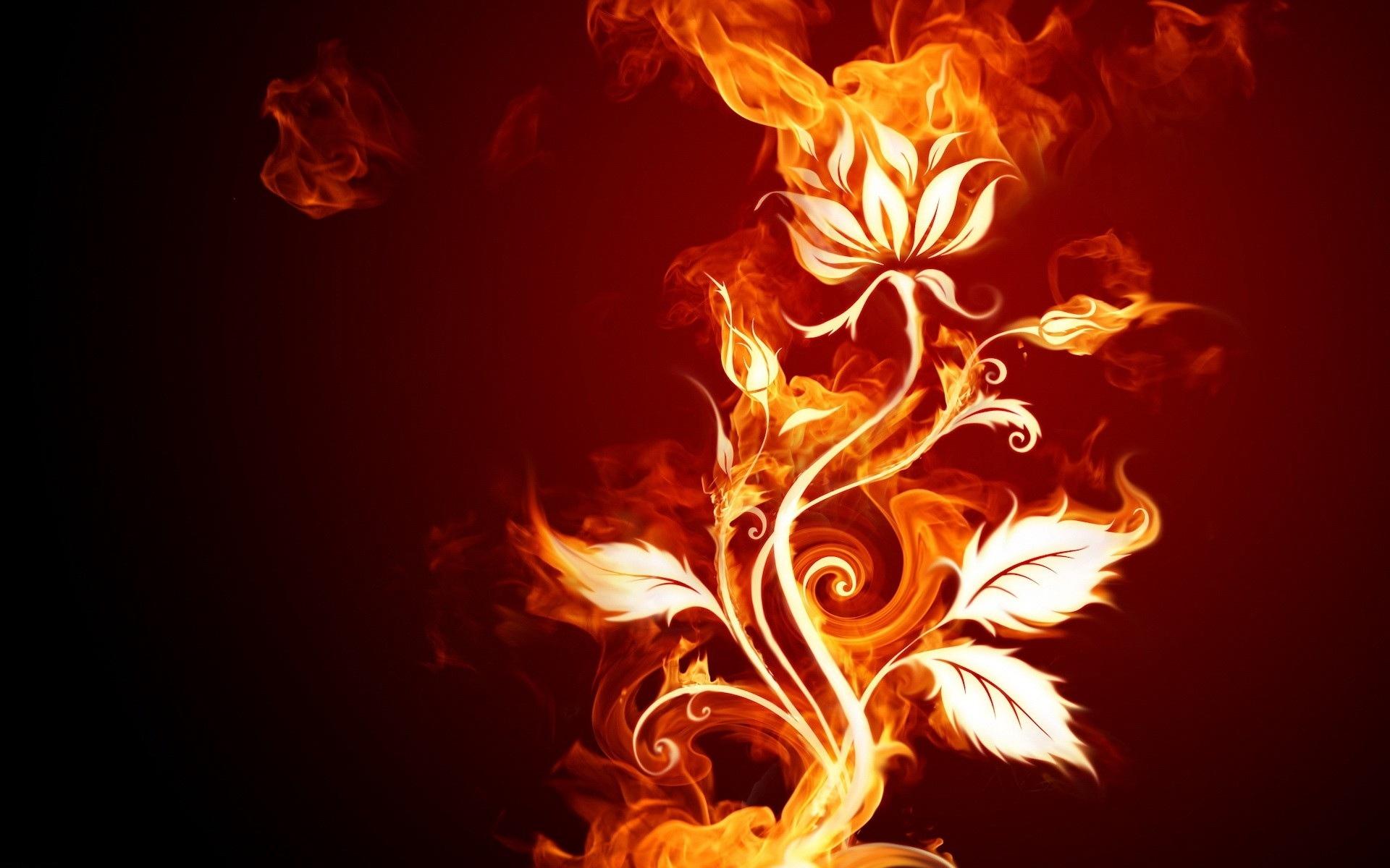 Hình nền bông hoa lửa
