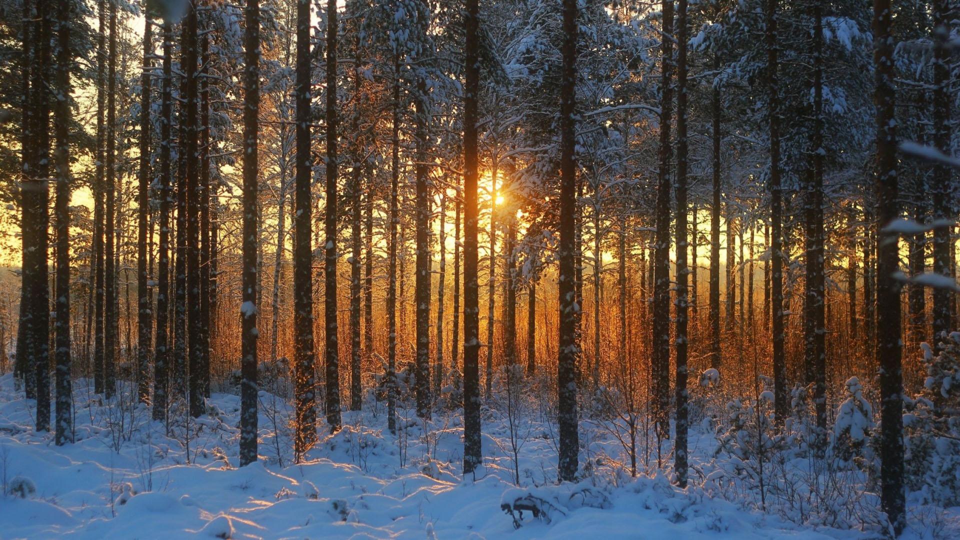 Hình nền cánh rừng mùa đông