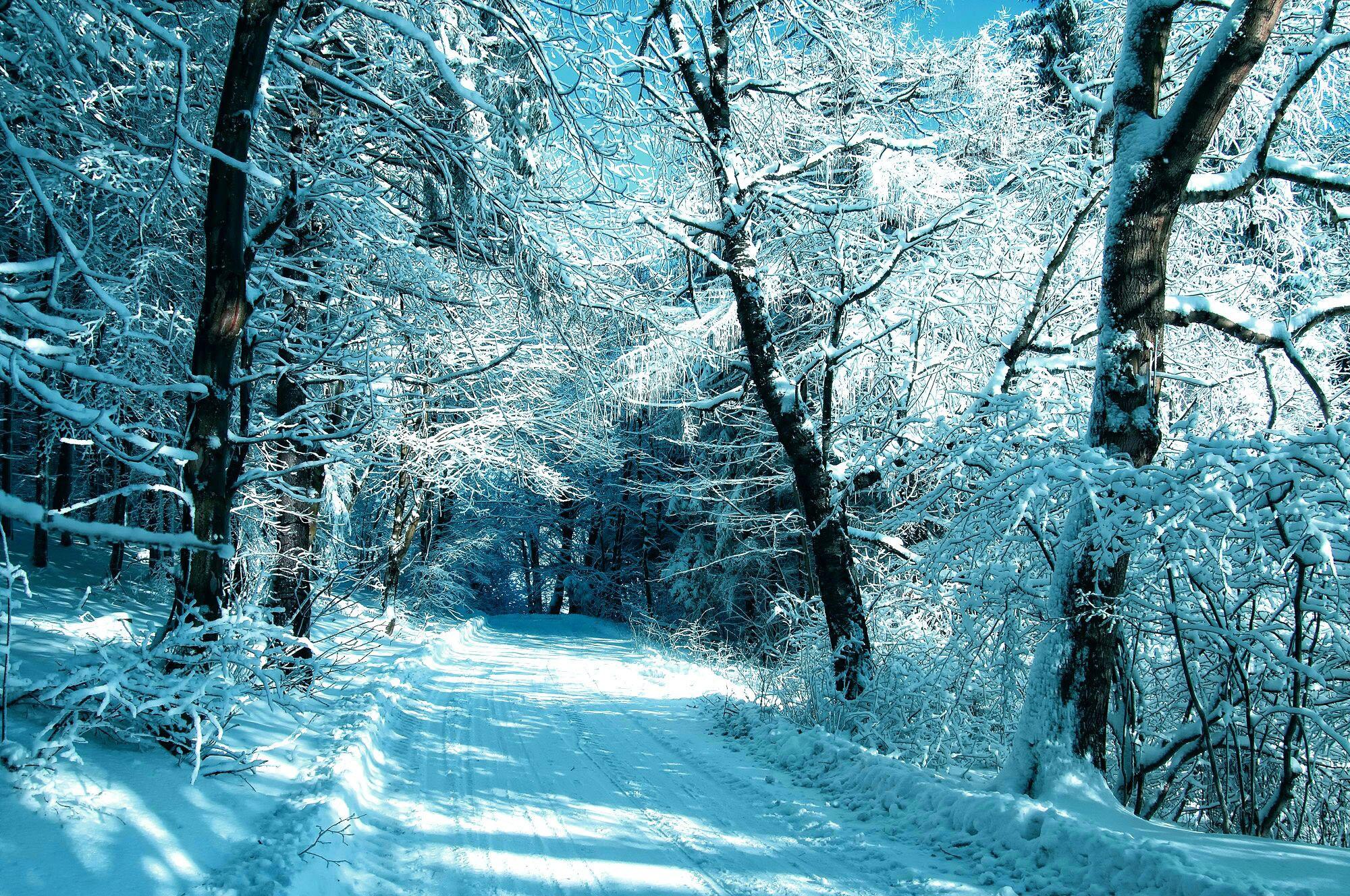 Hình nền cây cối mùa đông