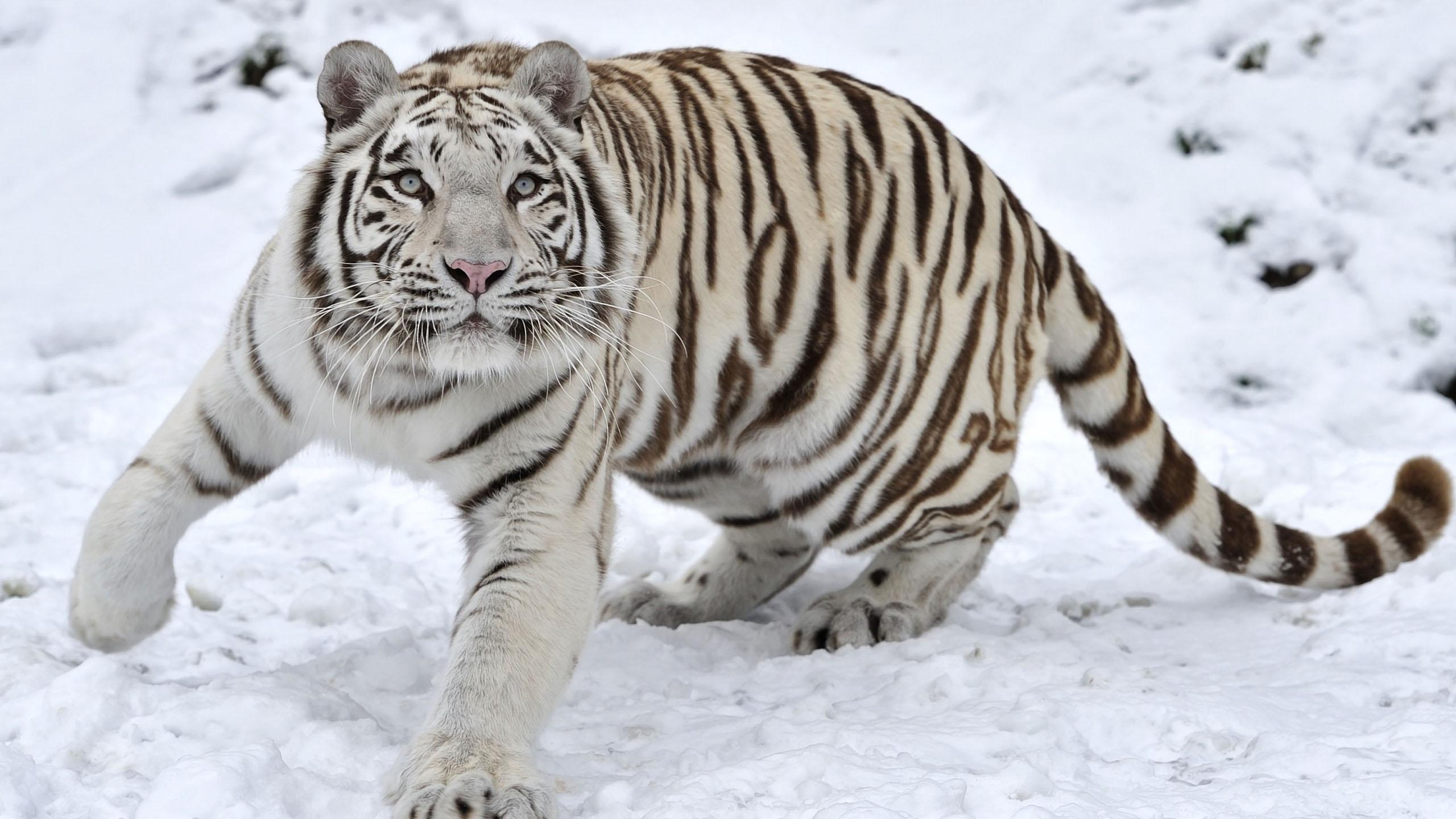 Hình nền động vật mùa đông