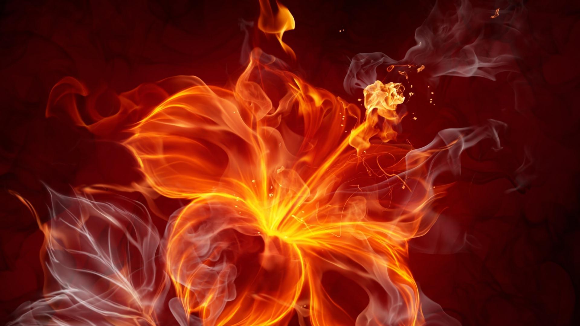 Hình nền hoa lửa cực đẹp