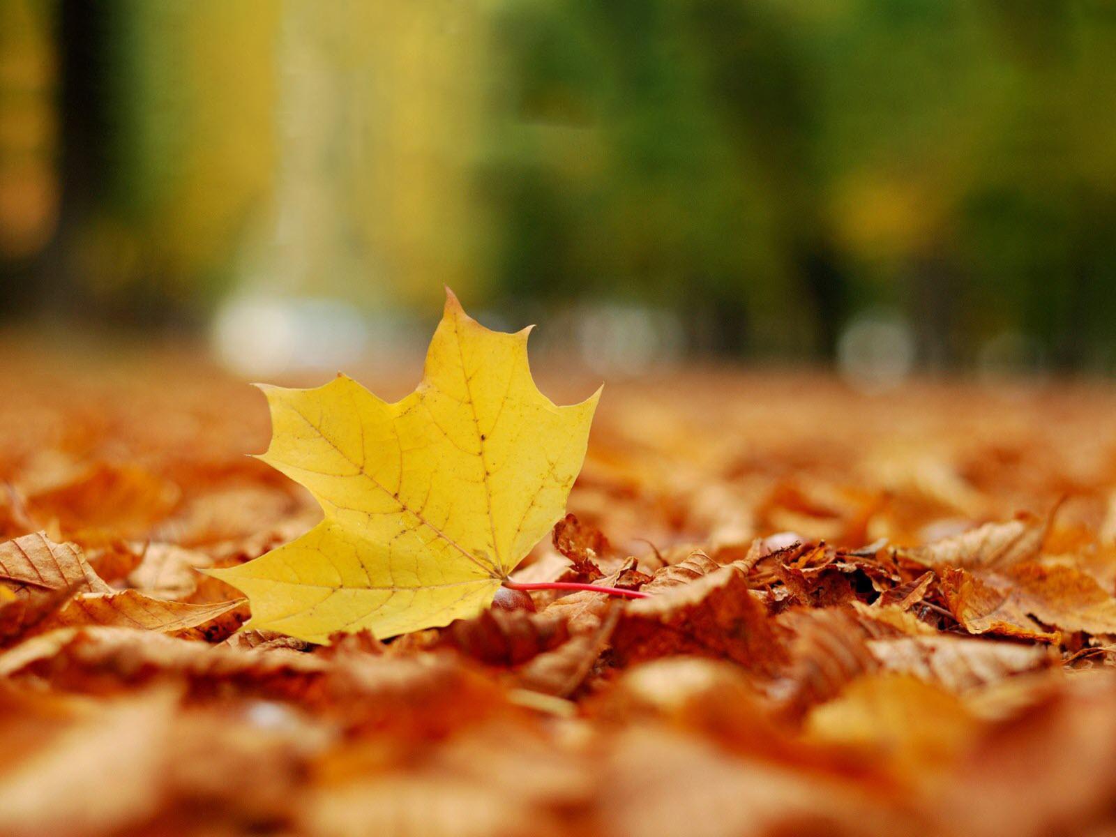 Hình nền lá cây đẹp nhất