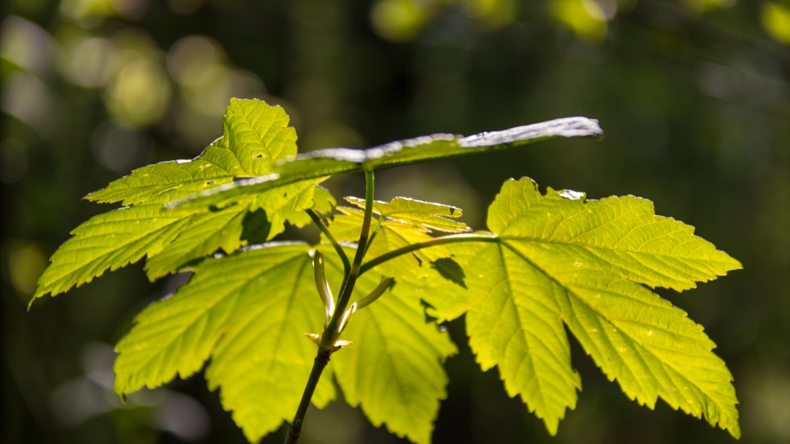 Hình nền lá cây đẹp