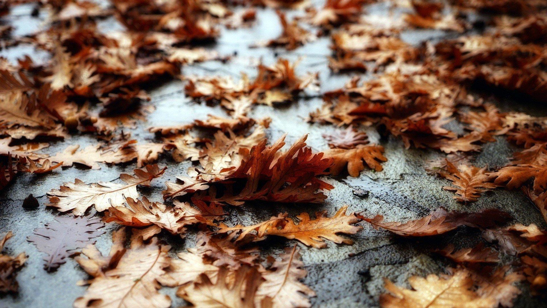 Hình nền lá cây độc đáo