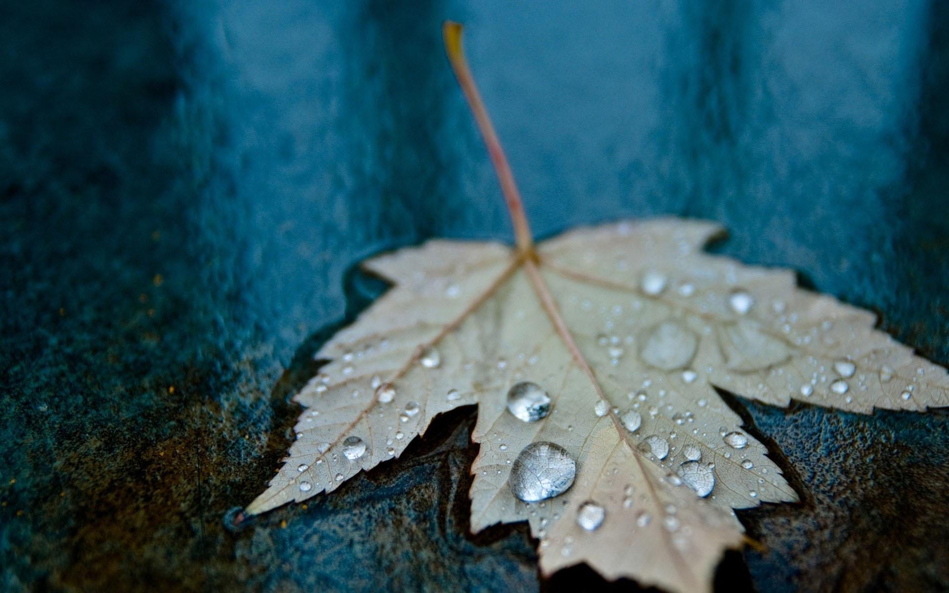 Hình nền lá cây dưới mưa