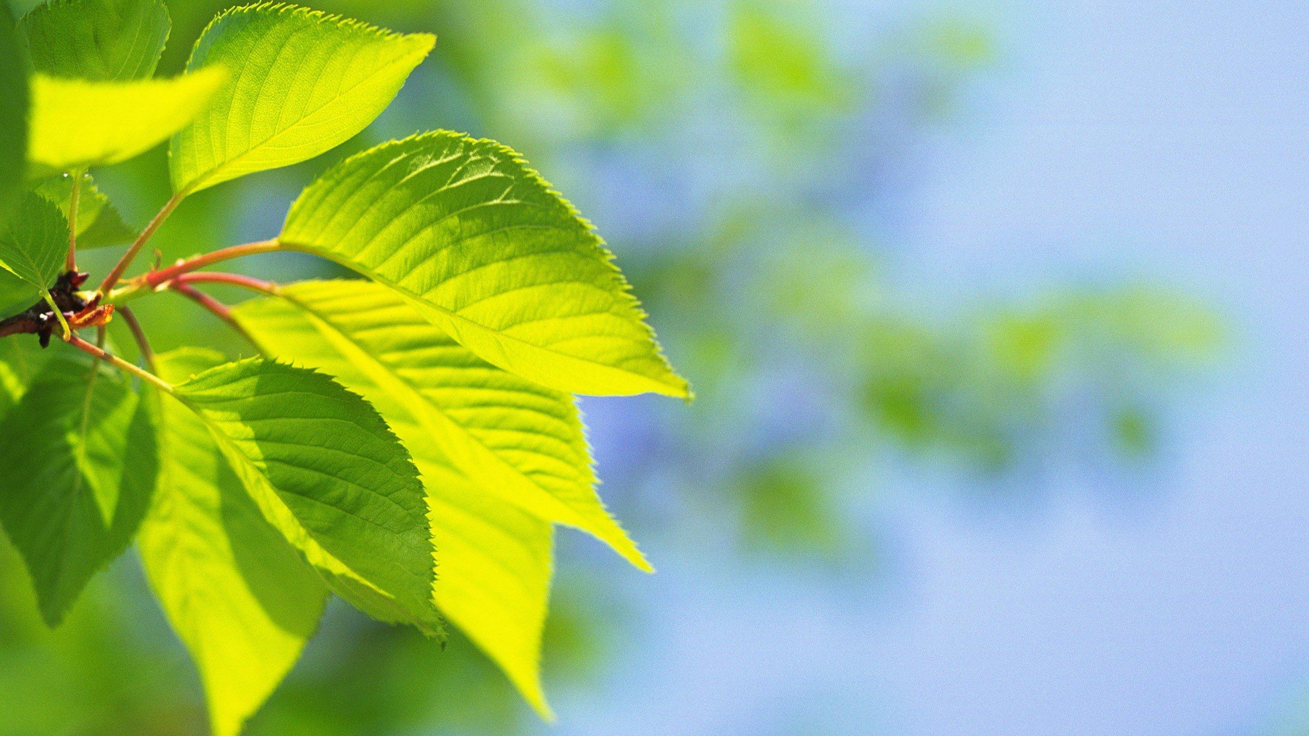 Hình nền lá cây dưới nắng