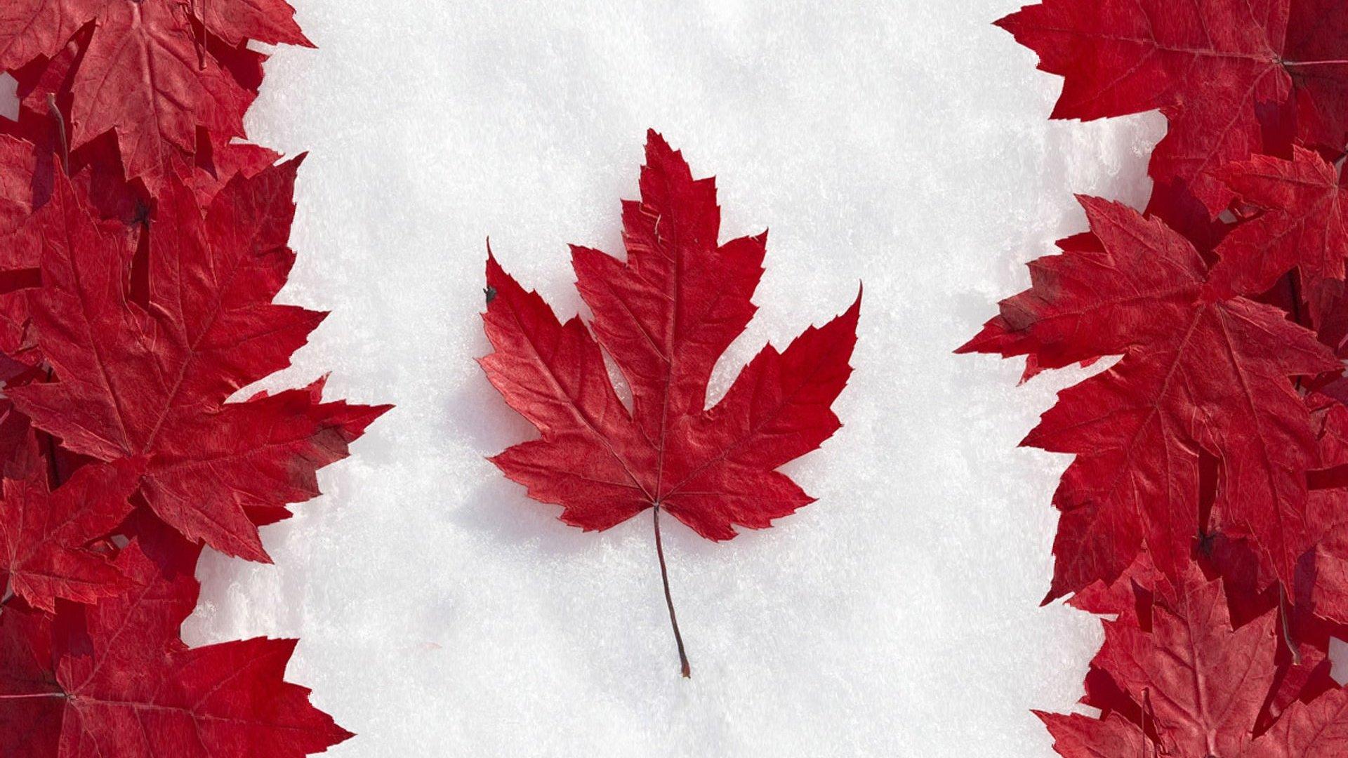 Hình nền lá cây hình lá cờ
