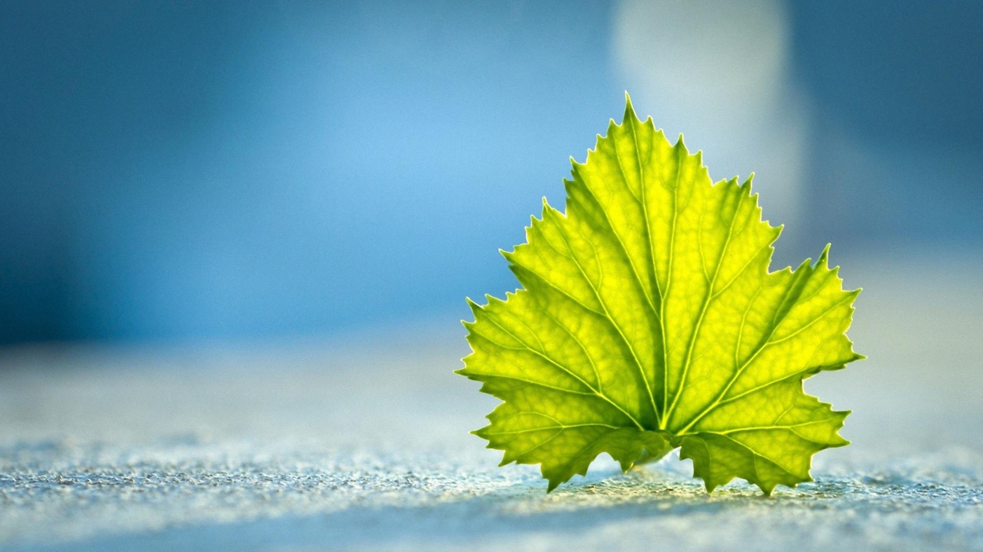 Hình nền lá cây màu xanh