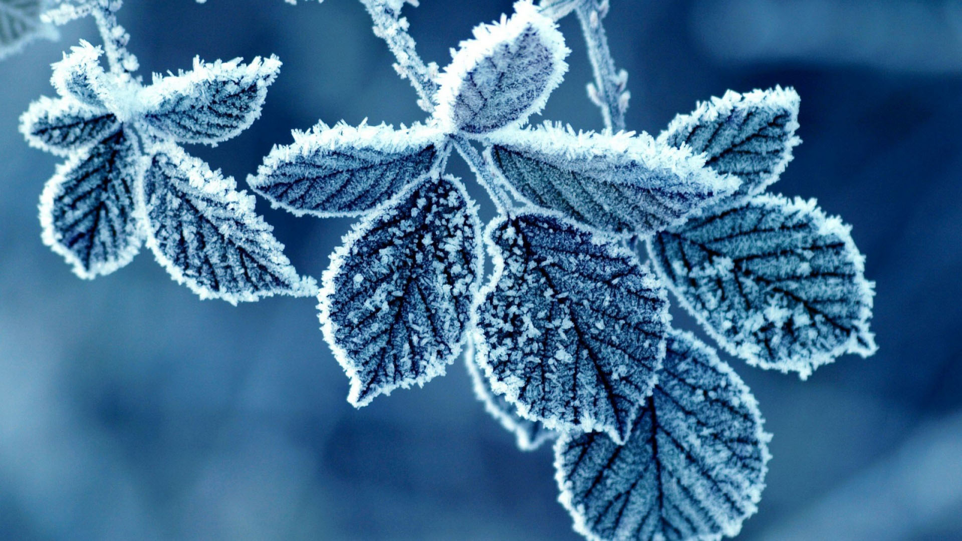 Hình nền lá cây mùa đông