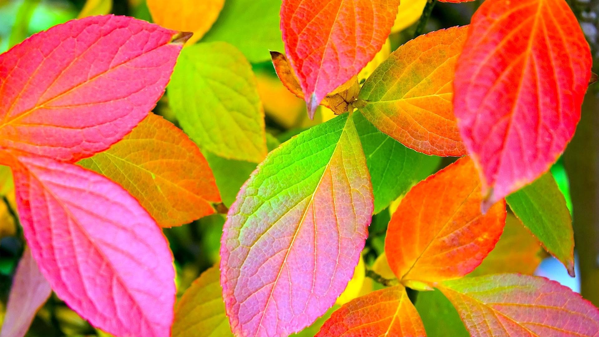 Hình nền lá cây nhiều màu
