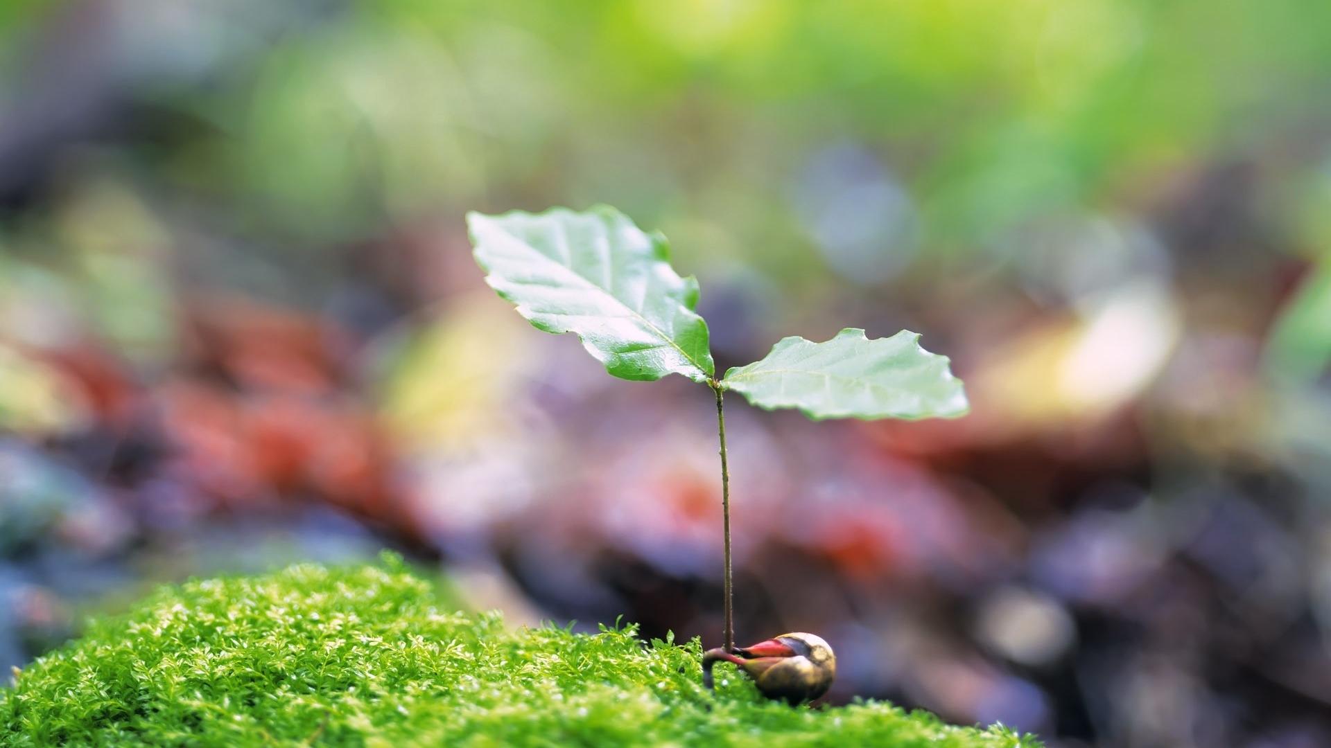 Hình nền lá cây non