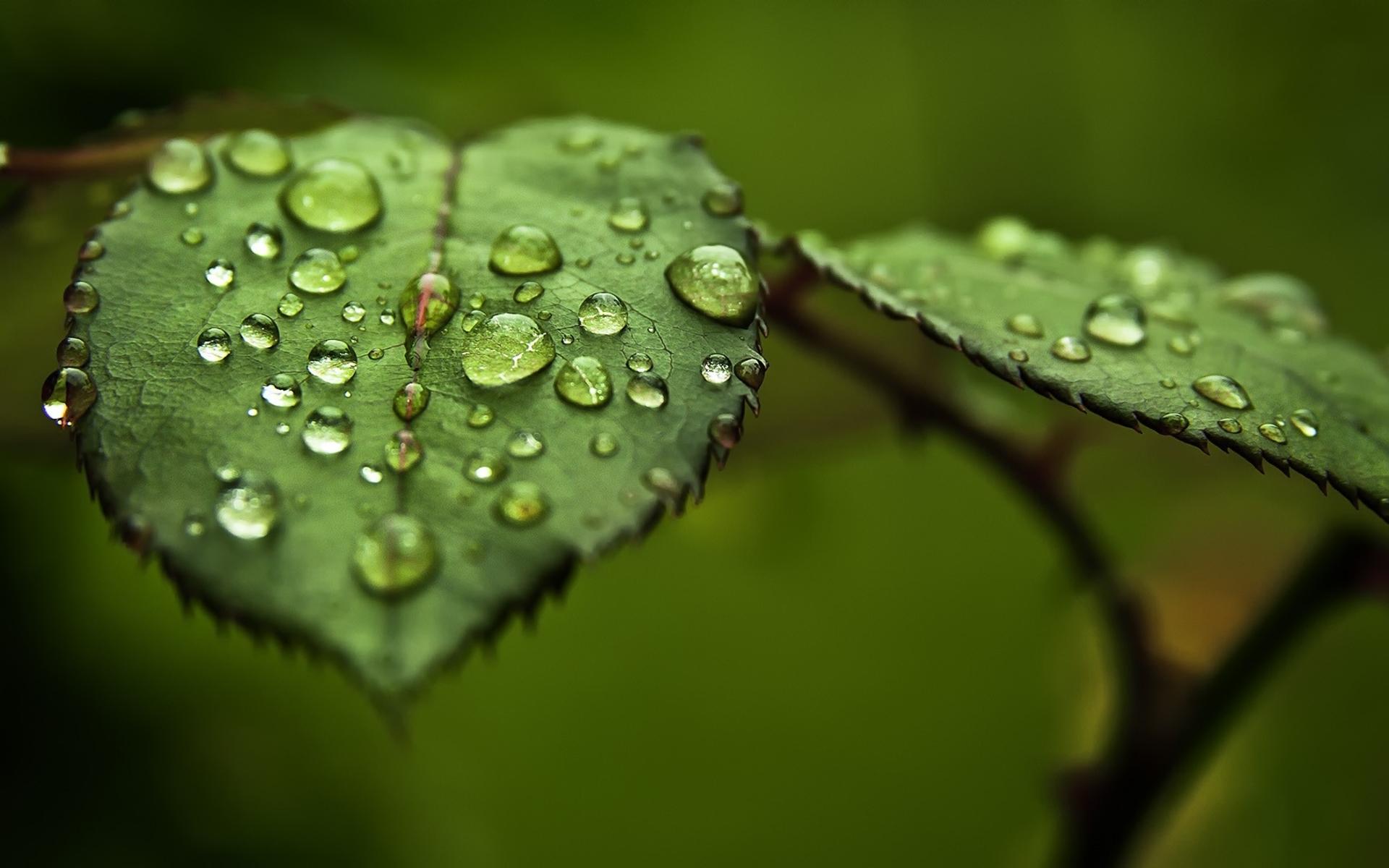 Hình nền lá cây trong mưa