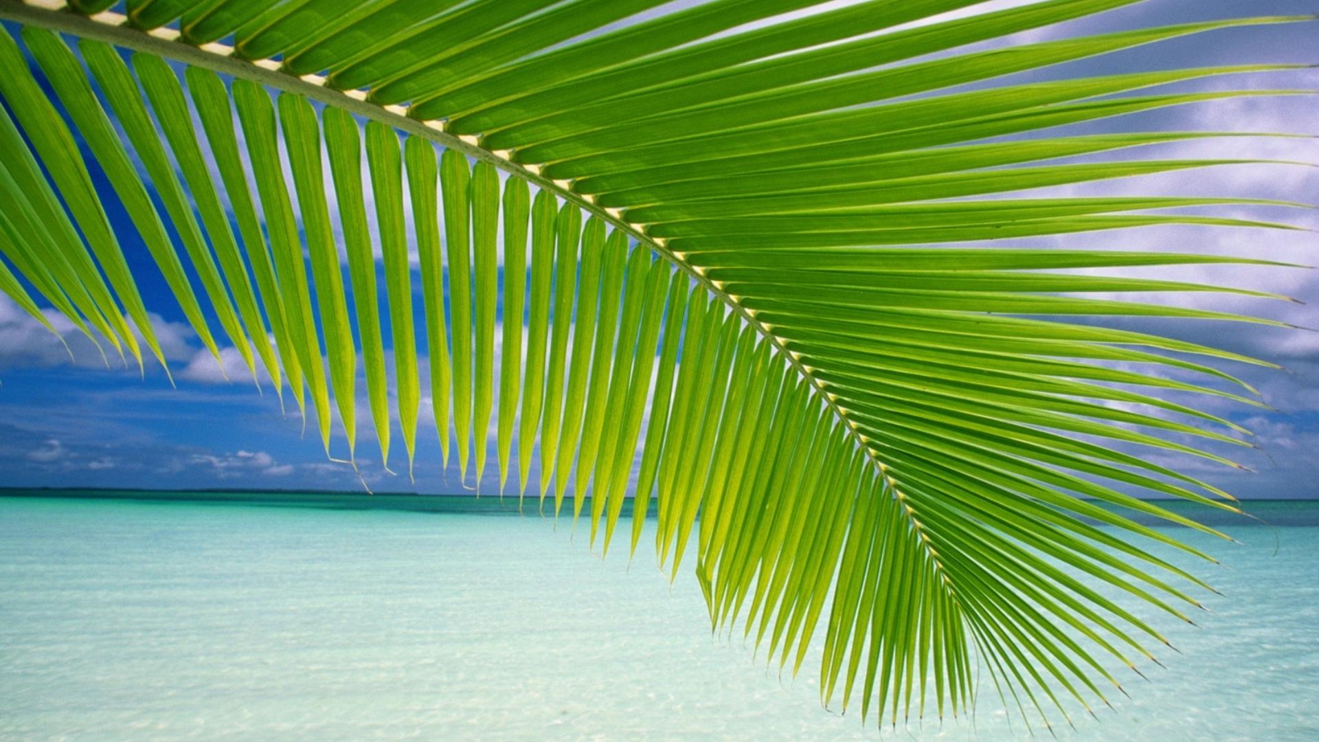Hình nền lá dừa trên biển