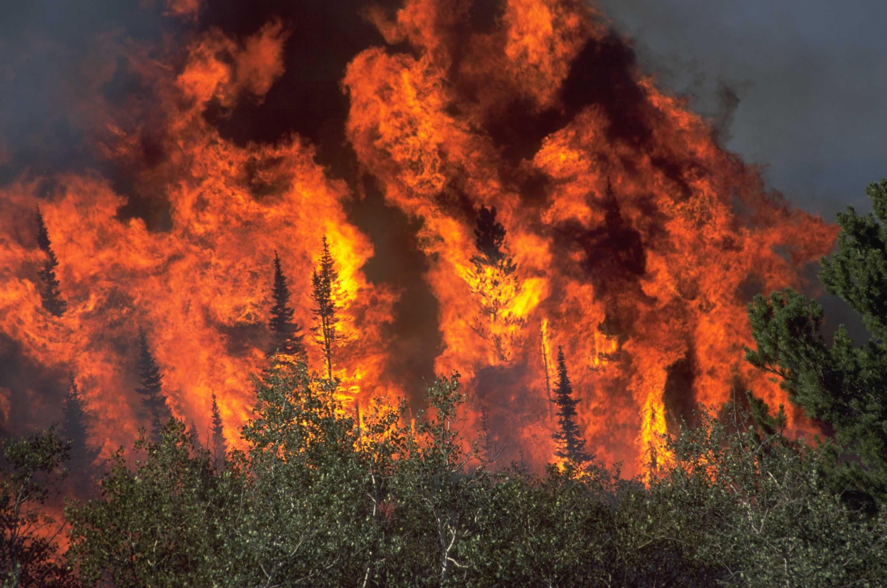 Hình nền lửa cháy