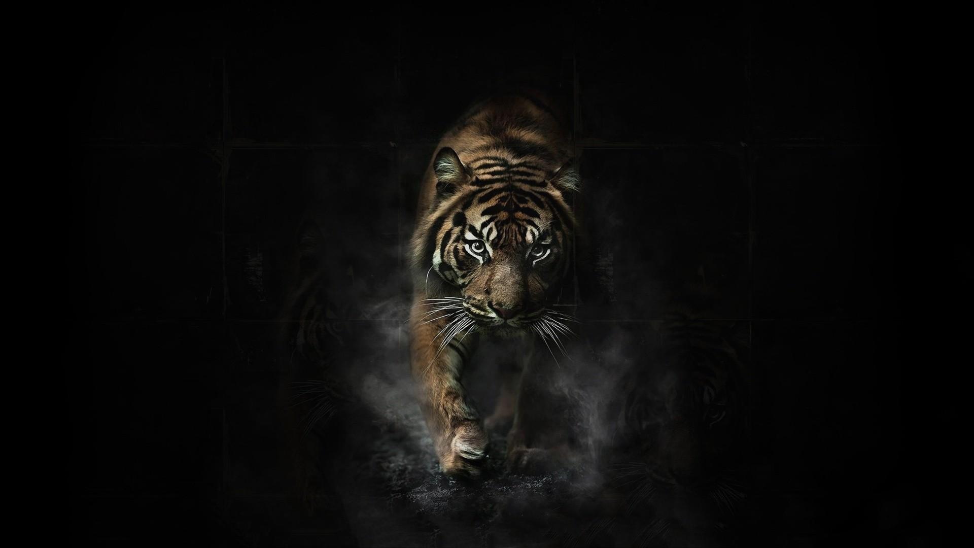 Hình nền máy tính nền đen con hổ đẹp