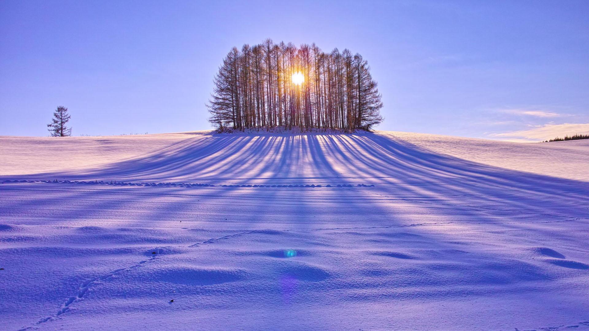 Hình nền mùa đông buổi sáng