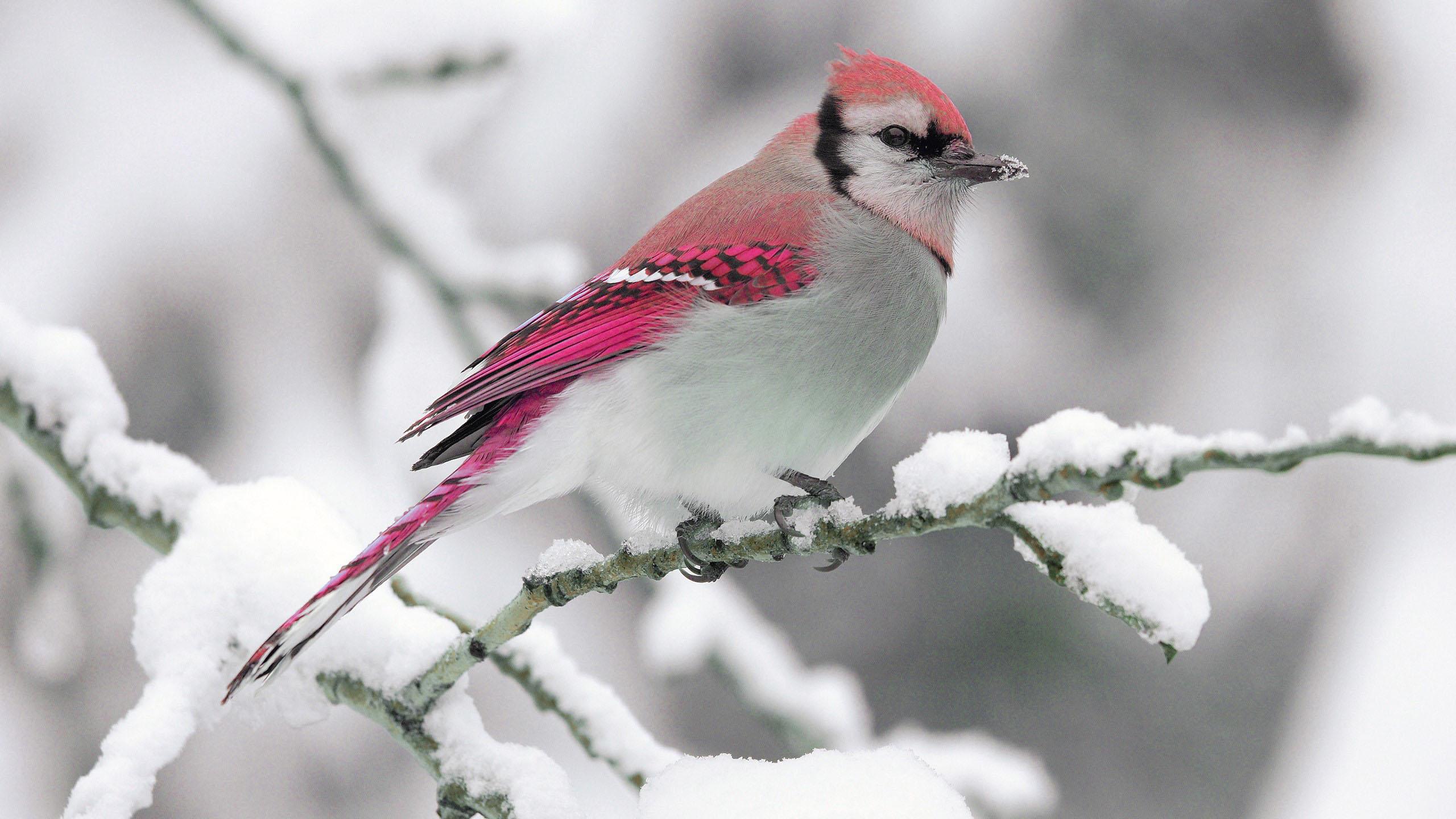 Hình nền mùa đông cực đẹp