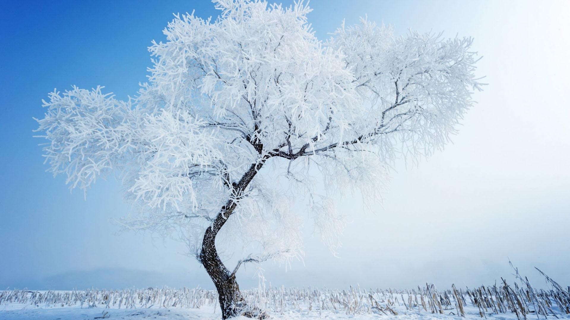 Hình nền mùa đông lạnh lẽo