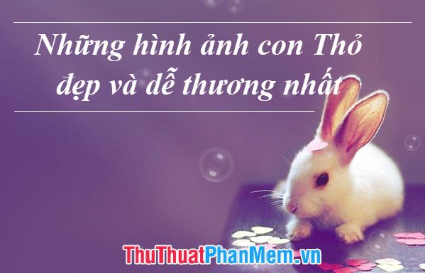 Những hình ảnh con Thỏ đẹp và dễ thương nhất