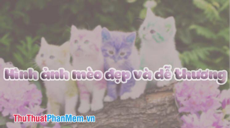 Hình ảnh con mèo - Những hình ảnh con mèo đẹp dễ thương nhất