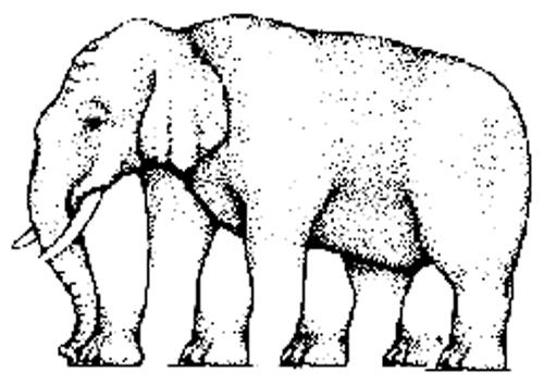 Con voi này có bao nhiêu chân nhỉ