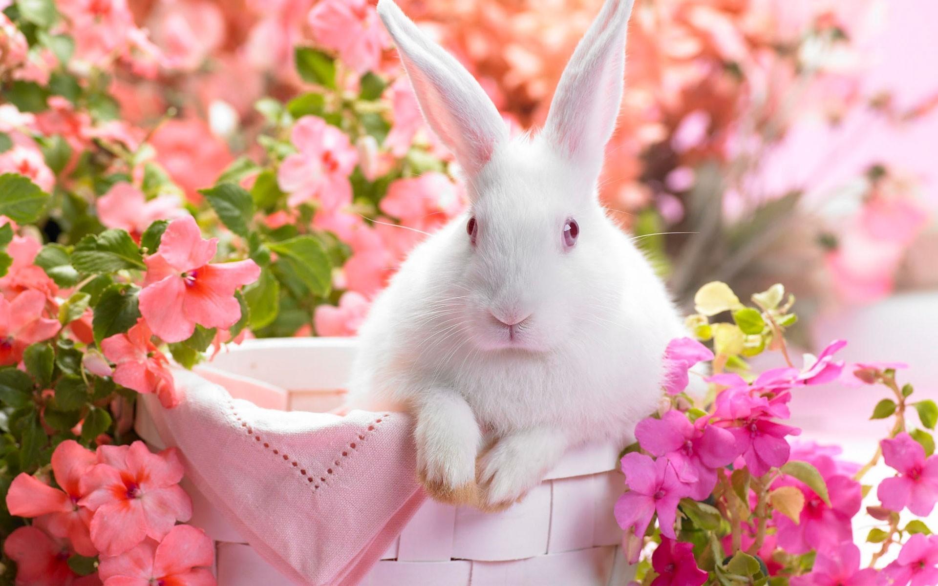 Ảnh con Thỏ đáng yêu nhất