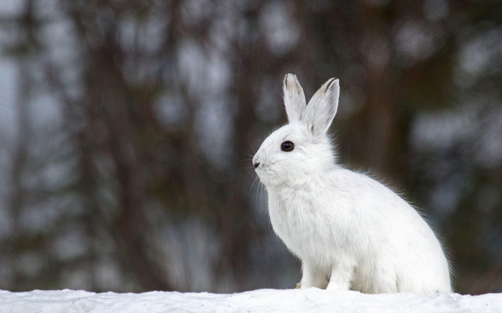Ảnh con Thỏ dễ thương