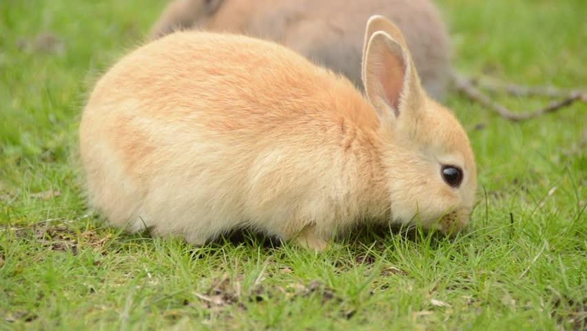 Ảnh con Thỏ đẹp nhất