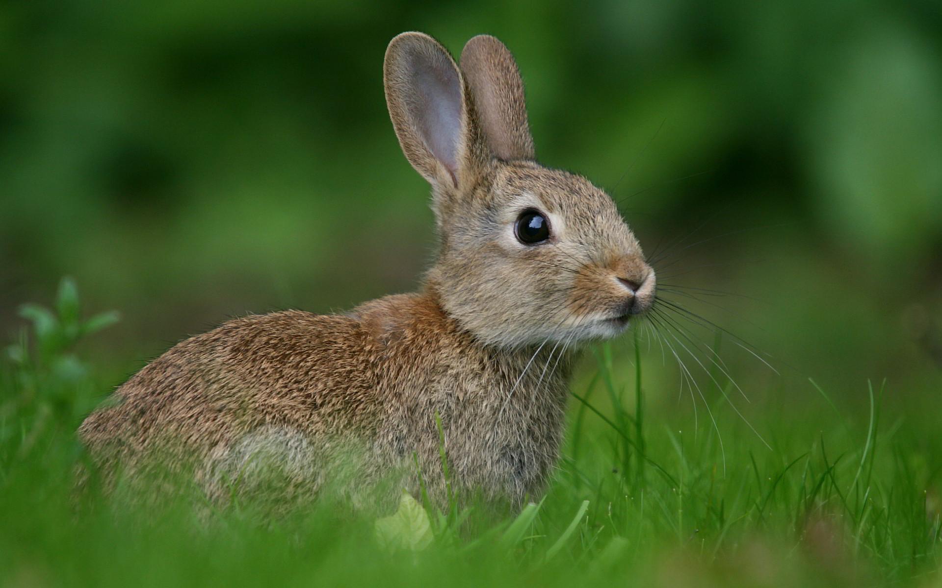 Ảnh con Thỏ đẹp