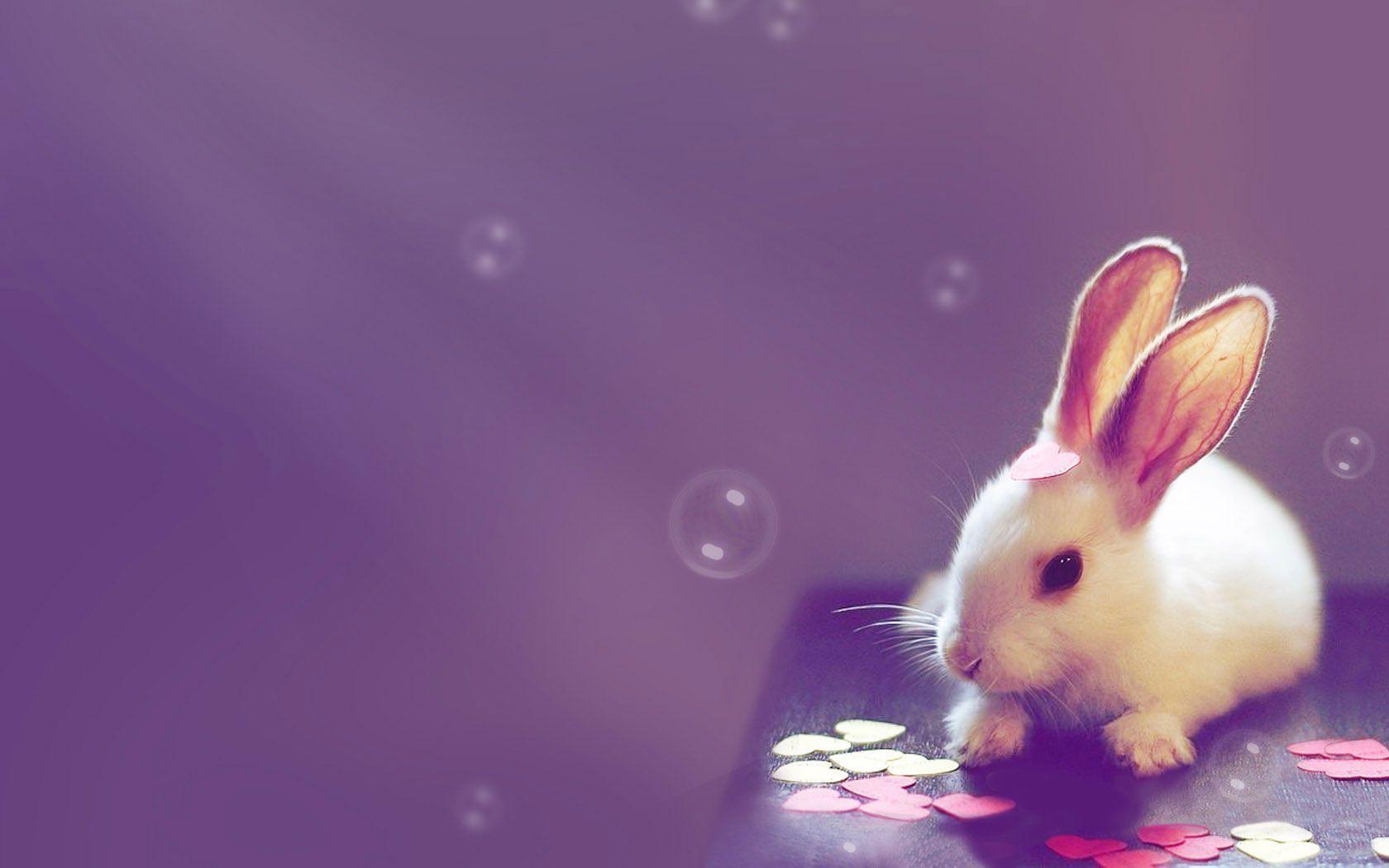 Hình ảnh chú Thỏ đáng yêu
