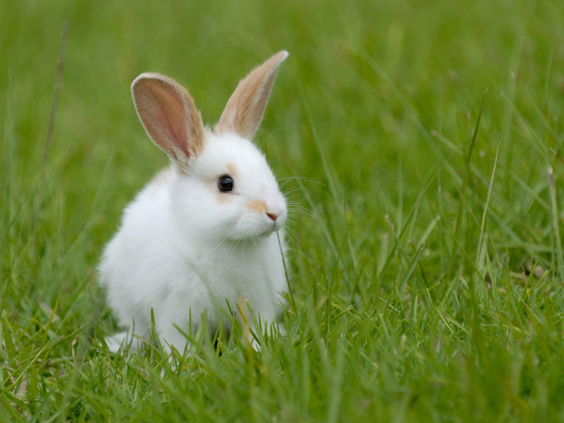 Hình ảnh chú Thỏ đẹp nhất