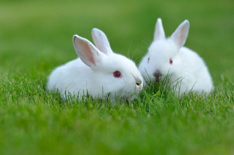 Hình ảnh con Thỏ cực dễ thương