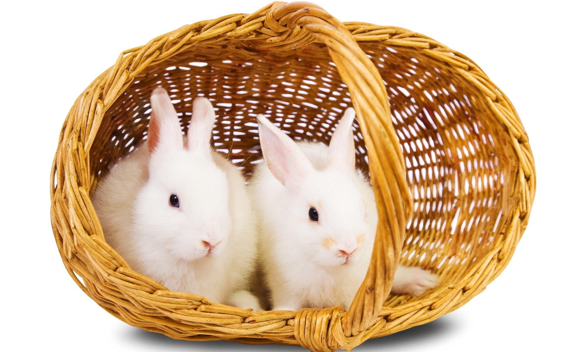 Hình ảnh con Thỏ  cực đẹp
