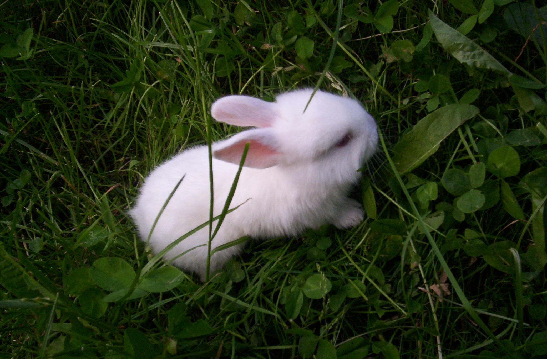 Hình ảnh con Thỏ đáng yêu nhất