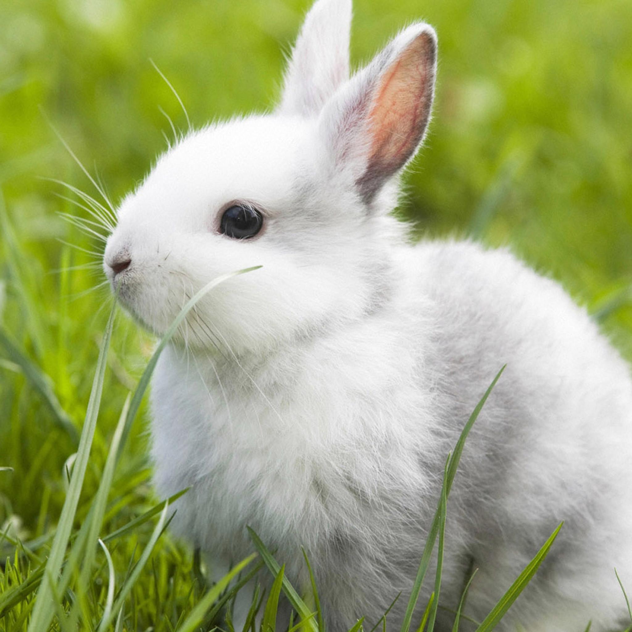 Hình ảnh con Thỏ đáng yêu