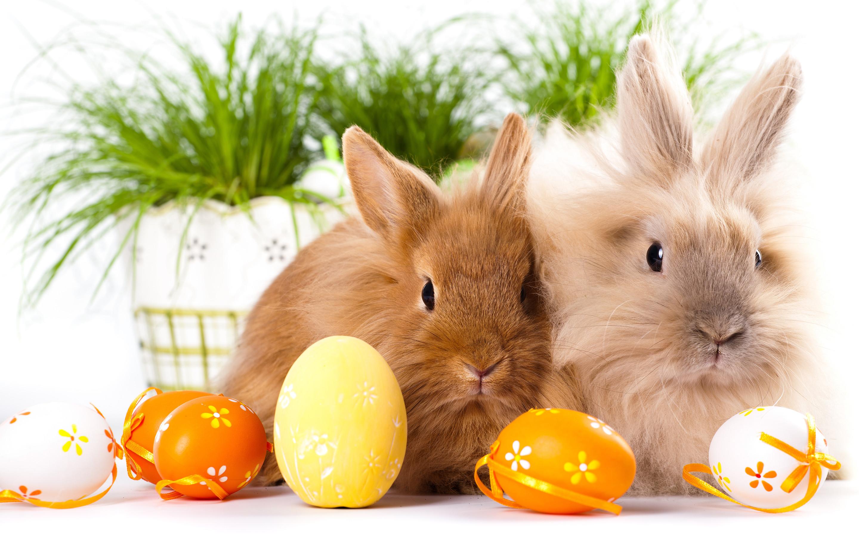 Hình ảnh con Thỏ dễ thương nhất