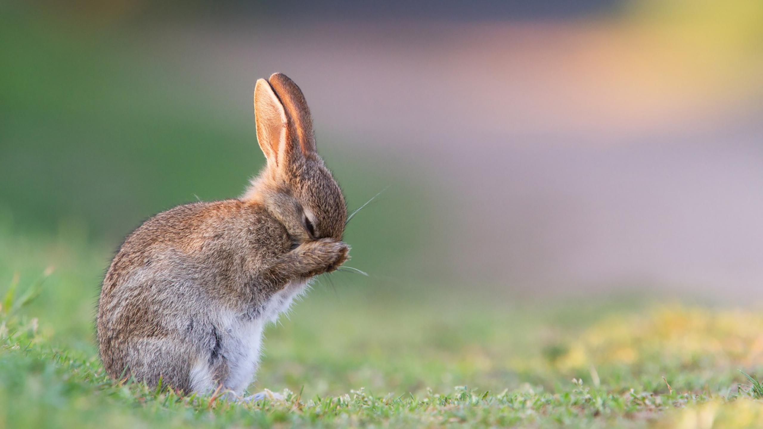 Hình ảnh con Thỏ đẹp (2)