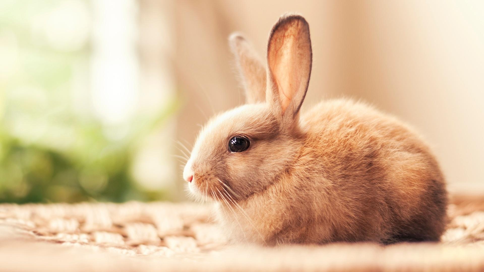 Hình ảnh con Thỏ đẹp nhất (2)