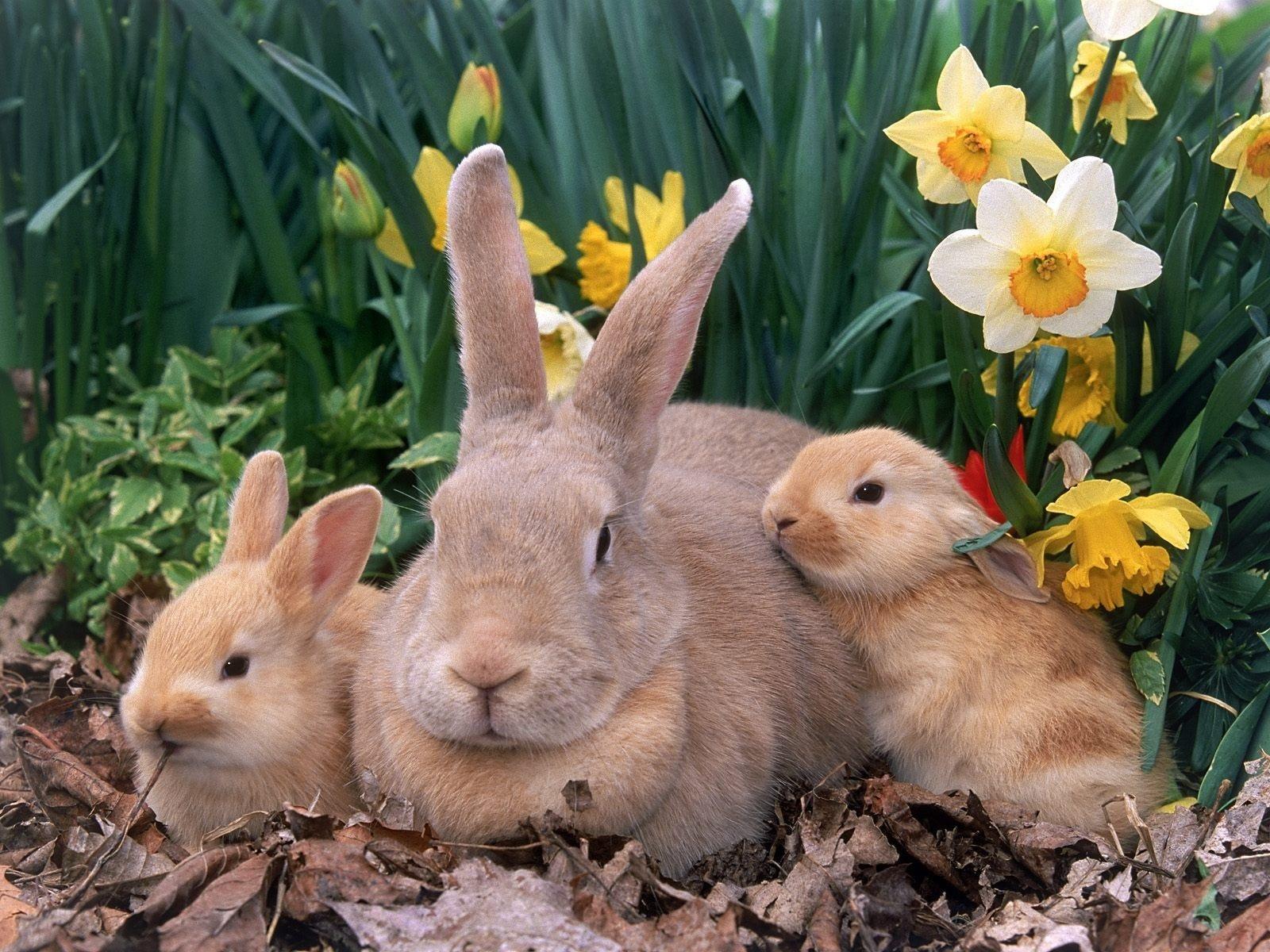 Hình ảnh con Thỏ đẹp nhất
