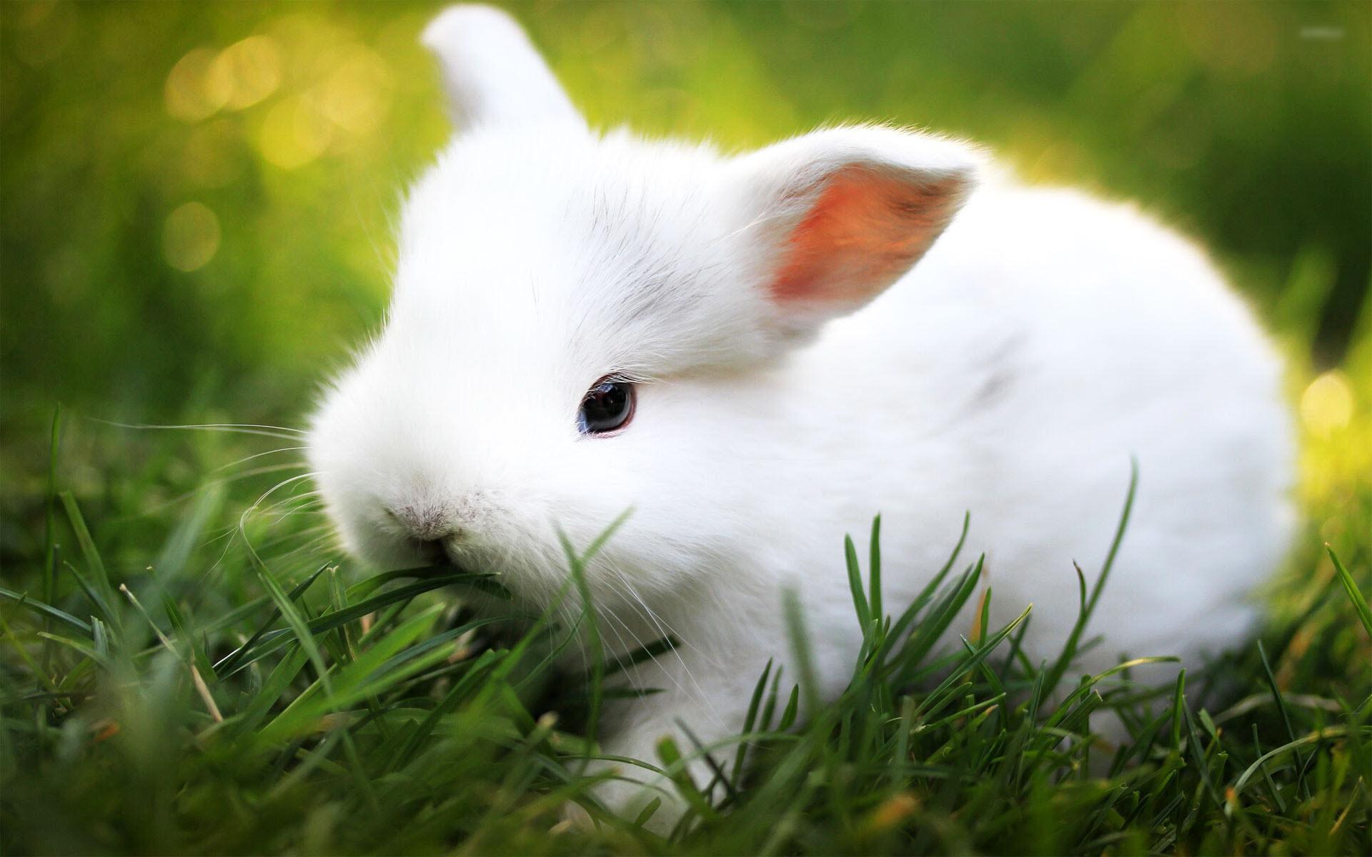 Hình ảnh con Thỏ đẹp và dễ thương nhất