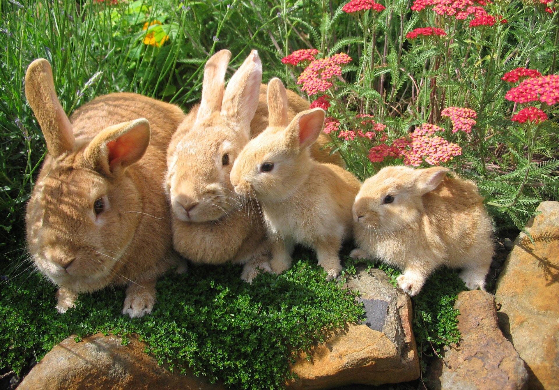 Hình ảnh con Thỏ đẹp