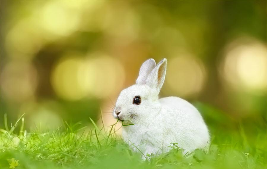 Hình ảnh con Thỏ